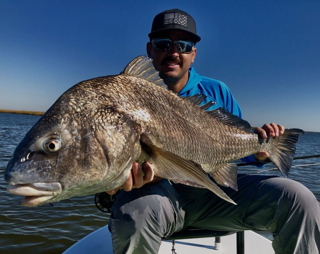 Fly angler proudly shows off a 30+ lb Black Drum caught on the flats of Southern Louisiana.